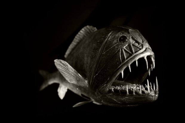 another_deep_sea_fish_by_roswell1947-d3heraf