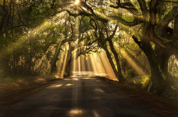 sun-rays-shining-through-trees